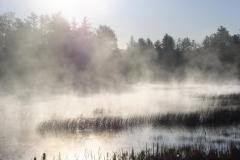 Wetland morning fog