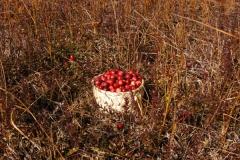 cranberrygoodsmall_15