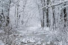 winterwetlandgondeksm_15